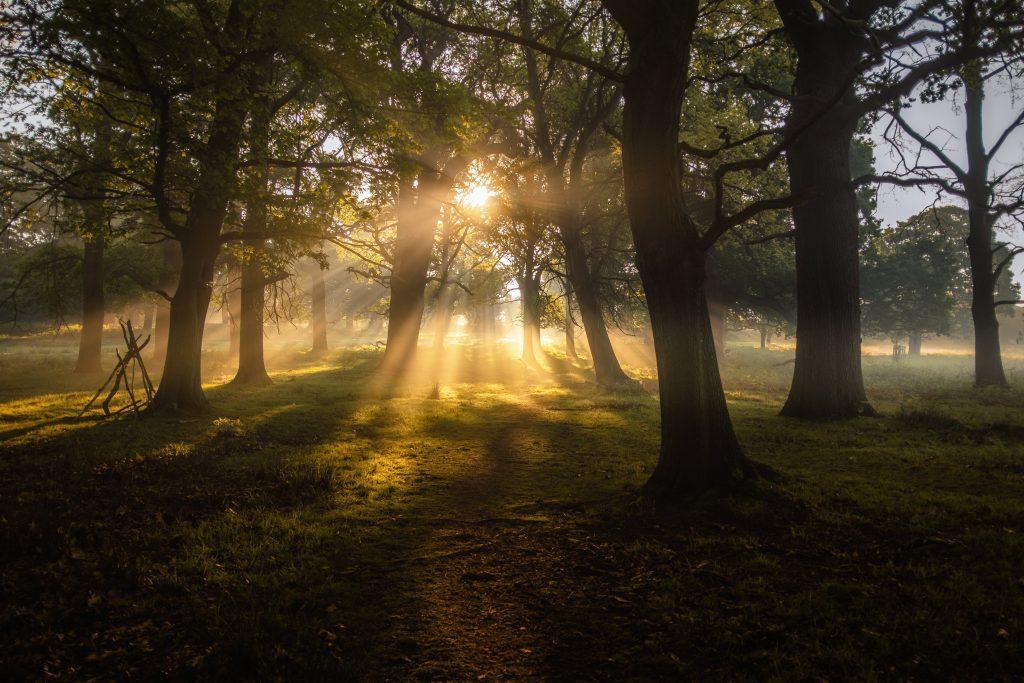 iekiant, kad Lietuva taptų klimatui neutralia šalimi, reikės didinti šalies miškingumą. Miškai - natūraliai CO2 sugeriančios teritorijos. Simon Wilkes nuotr. iš Unsplash