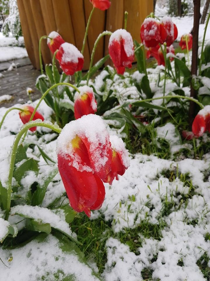 Kodėl šiemet sniego gavome net gegužę?